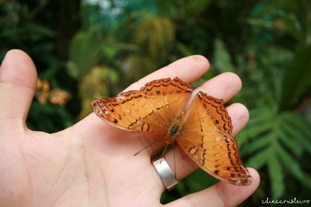 butterfly park kuala lumpur parc de fluturi (8)