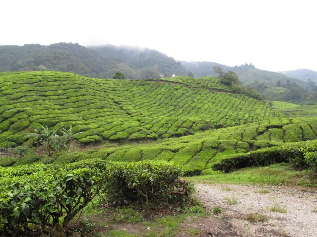 Jurnal de Cameron Highlands