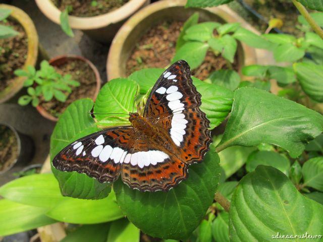Jurnal de Cameron Highlands, Malaezia - Valea trandafirilor si Ferma de fluturi