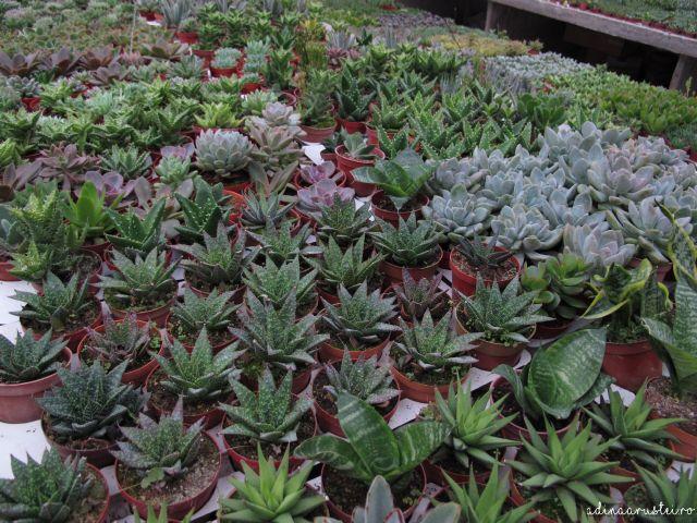 Jurnal de Cameron Highlands, Malaezia - Pagina 5 - Cactus Point si Ferma de capsune