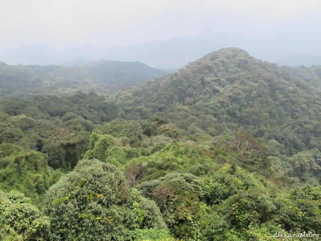 Jurnal de Cameron Highlands, Malaezia - Gunung Brinchang